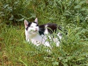 Screenshot vom Programm: Katzenschoner
